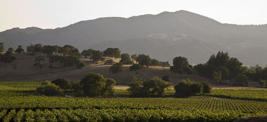 Napa Valley wineyards and landscape