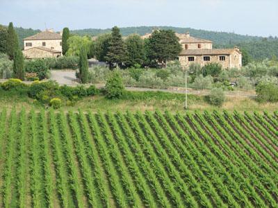 Rocca delle Macie vineyards