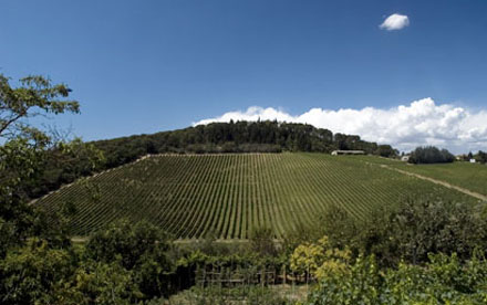 Tignanello Estate Vineyards