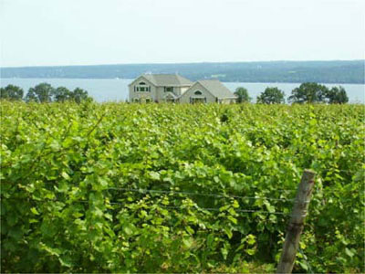 Finger Lakes vineyard